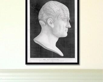 Phrenology Head antique reproduction print litecoin print phrenology print anatomy print vintage print antique print phrenology head