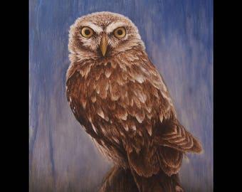 Little Owl [ Print ]