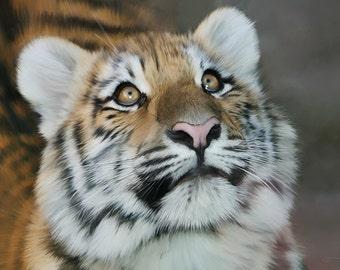 Original Art, ACEO, Tiger Cub, Ever Hopeful