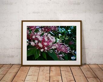 Morikami Flowers - nature photography, landscape photography, garden