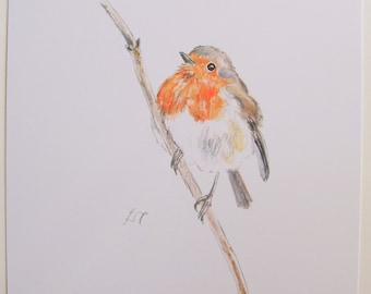 Robin, art print, wildlife print, watercolour print.