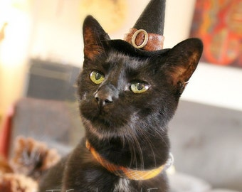 Cat Halloween Costume - Cat Costume - Witch Hat - Pet Costume Good Witch - Pet Halloween Costume & Cat Dog Robin Hood Hat Peter Pan Hat Hand Felted Wool