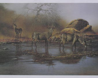 Kudu Buck Watering Hole Lithograph Printing Press Print by Famous Dutch Born South African Wildlife Artist Henk Vos Suitable For Framing