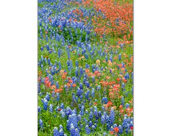 Fields of Texas Wildflowers Indian Paintbrush and Texas Bluebonnet Bluebonnet Photo Decor, Wall Art Red and Blue Fine art Photo nature print
