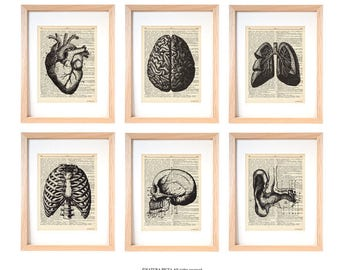 Anatomy print set of 6-anatomy dictionary prints-home decor-anatomy print-medical print-gift for doctor-gift idea-anatomy-NATURAPICTA-DP232