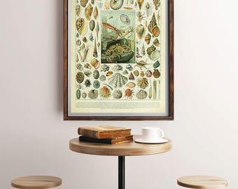 Vintage Sea Print, French Wall Art, Natural History Art, Vintage Wall Decor, Larousse Print, Ocean Art, Nature Print, Adolphe Millot Poster