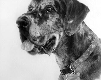 Custom Pet Portrait in Graphite