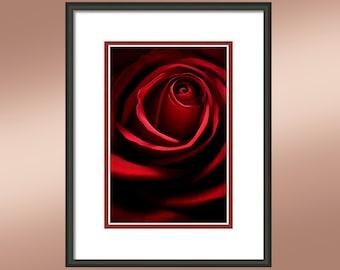Red Rose #2. Fine Art Print