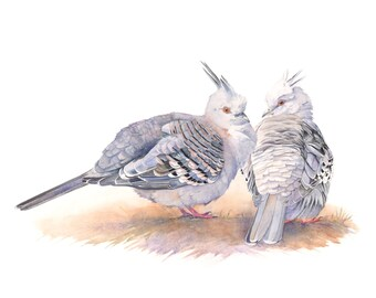 Crested Pigeon watercolour painting print CP036DL, digital print, instant download, printable art, australian bird watercolor print