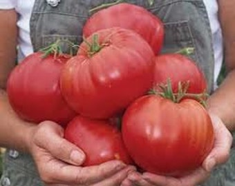 Tomato Seeds Beefsteak Organically Farm Grown 25 Seeds