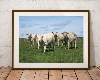 Farm Wall Art, Farm Wall Decor, Farm Prints, Farm Photography, Farm Photo, Farm Art, Farm Home Decor, Farm House Wall Decor, Farmhouse Decor