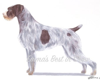 German Wire Haired Pointer Dog - Archival Fine Art Print - AKC Best in Show Champion - Breed Standard - Sporting Group - Original Art Print