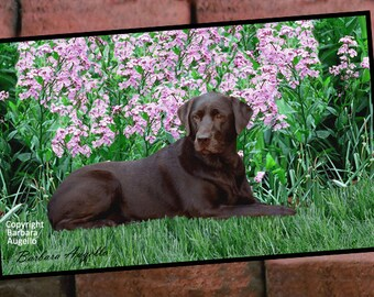 Chocolate Lab Doormat, Chocolate Lab Gift, Chocolate Lab Floor Mat, Chocolate Lab Art, Chocolate Lab