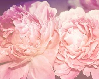 Technicolor - 8x10 photograph - fine art print - nature - nursery art - pink and purple flowers - twin girls art