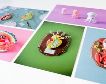 5 Postcard Set: Specimen collection - squid octopus daphnia clam anatomy biology photography blue pink craft art HineMizushima stationary