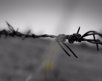 Perfectly Twisted (Barbed wire)