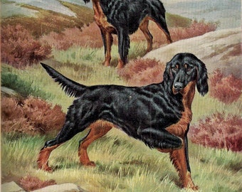 Dog Lover Art Vintage Dog Art Walter A Weber Vintage Dog Print Canine Art Dog Breeds Working Gordon Setter Dog Decor Dog Picture Dog Print