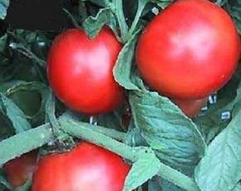 50 Tomato Seeds Early Girl Tomato Seeds