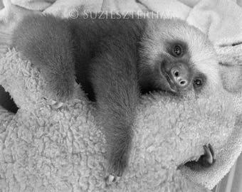 50% OFF SALE, Baby Sloth Photo, Black and White Nursery Art, Baby Animal Photograph, Kids Room Art, Baby Nursery Wall Art, Animal nursery