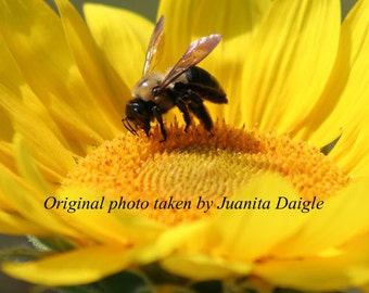 ID4289 1  8x10 Flower Photograph Print of a Sunflower and a Bee