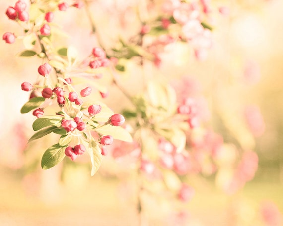 Yellow Wall Decor Pink Flower Photography Red Blooms Floral