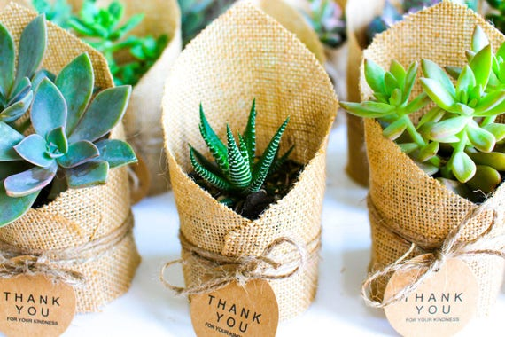 Hessian High Top Succulent Baby Shower / Christening Favours.