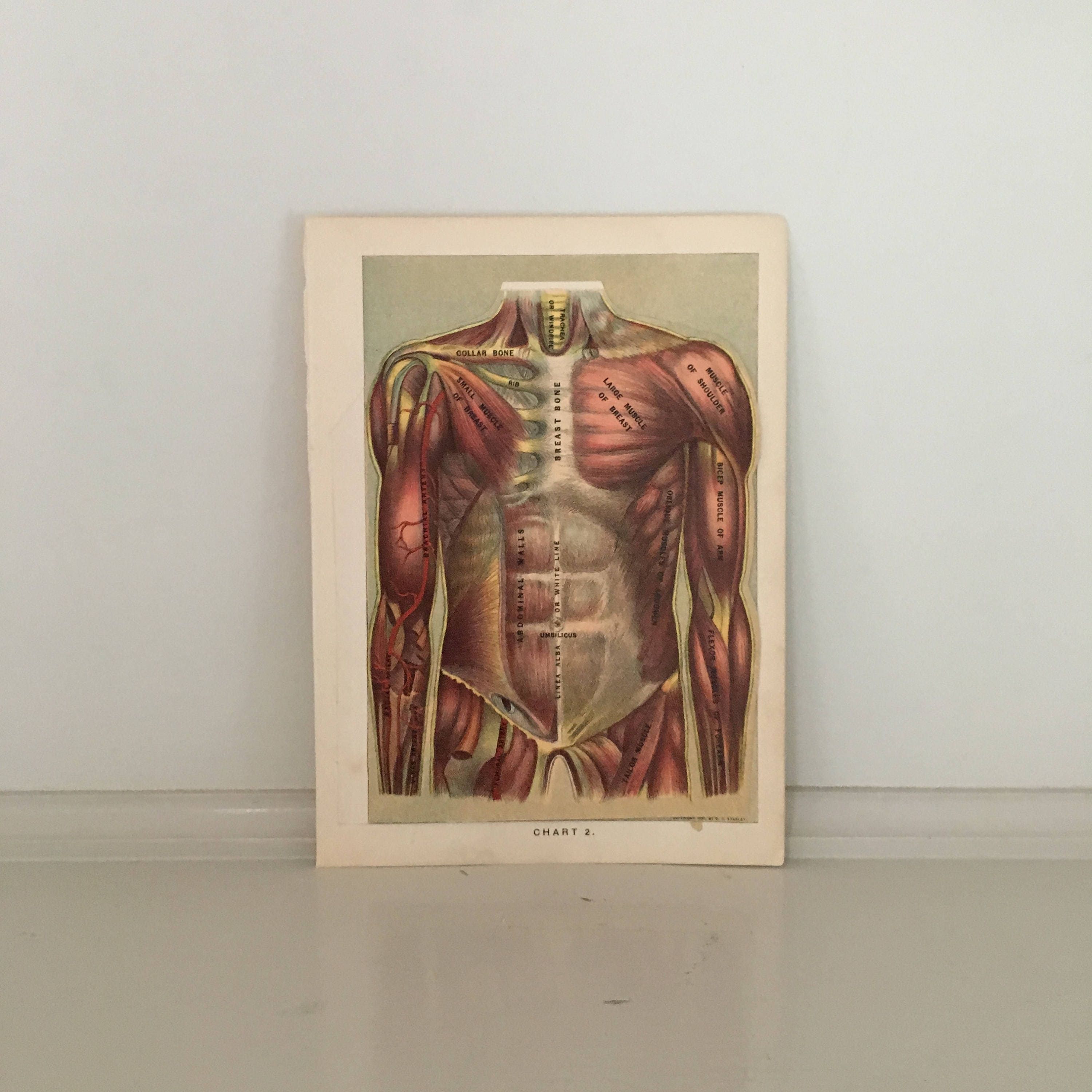 C 1903 Human Anatomy Print Interactive Medical Lithograph