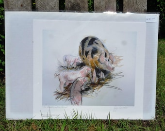 Pig and Piglets Giclee Print - Beattie and her Brood