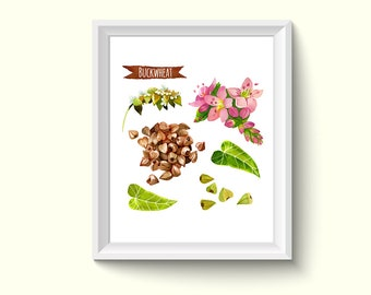 Buckwheat Herbs Plants Watercolour Painting Drawing Art Print N215