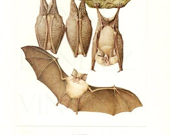 1970 Vintage bat print Bat poster Antique bat art Bat decor Rinolphe Bat gift Antique bat illustration Bat painting Bat wall hanging