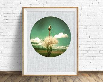"nature photography, large art, large wall art, printable art, instant download printable art, nature prints, wall art prints - ""Capture"""