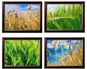 Wheat Field Photo, Nature Photography, Landscape Photo, Fine Art Home Decor, Summer Photo, Wheat Print, Landscape Print, Nature Art Print