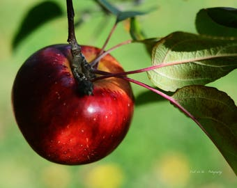 Red Delicious Apple Print. Food Photography. Once Upon a Time. Like a Fairy tale - Professional Print.