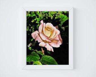Watercolor Roses, Rose Watercolor, Rose Wall Art, Rose Wall Decor, Printable Watercolor, Rose Print, Rose Printable, Rose Painting