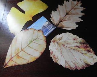 4 postcards depicting leaves of trees/flowers minimum 9 cm x 7 cm