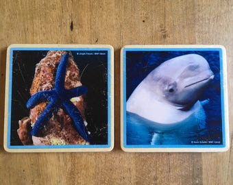 Coasters (2) WWF nature photography, starfish, sealife decor, bar accessories