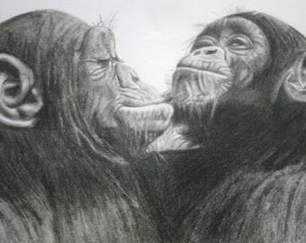 Two Chimps Chimpanzees Animal Print Graphite Pencil Drawing A4 and A3