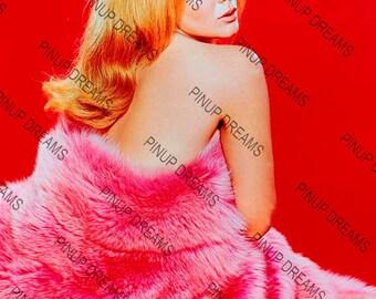 "Vintage A4 (11.7"" x 8.3"") Beautiful Photo Wall Art Print of Ann Margaret Hollywood Movie Star Legend"