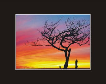 Pamlico Sound Sunset Ocracoke windswept tree Photographic Print matted in black North Carolina