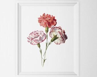 Minimal Art Poster, Rose Pink Carnations, Flower Print, Bathroom Art, Nursery Art, Wall Decor, Minimalist Print, Vintage Art Engraving Print