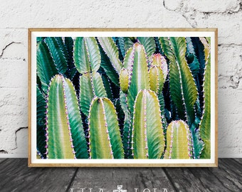 Cactus Photo Print, Botanical Wall Art, Western Decor, Arizona Desert Photo, Green Plant, Printable Instant Download, Large Poster Art