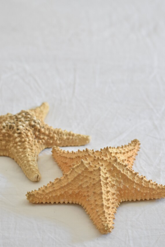 "pair of real 7"" real large natural starfish / ocean / beach house decor"