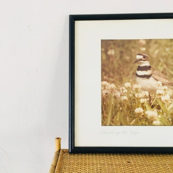 Vintage Bird Photograph Black Framed Bird Photo Earthy Muted Tones Wall Art