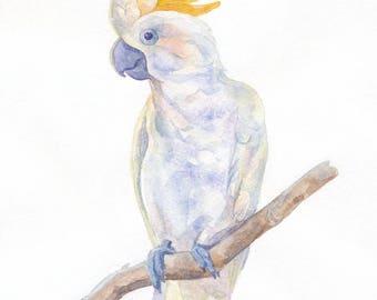 Parrot cockatoo illustration. Watercolor illustration, watercolor clipart, digital prints, wall art decor, bird illustration, card.