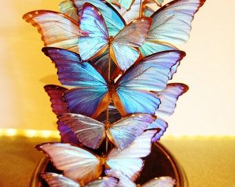 Butterflies inglass domes