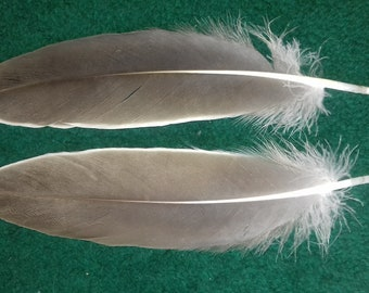Goose feathers, matched pair,naturally molted, cruelty free.