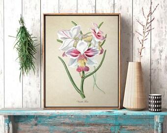 Floral Botanical Print, Vintage Pink Vanda Orchids Print, Home Decor Antique Orchid Art, Colorful Vanda Orchid Decorative Reproduction FL090