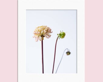 """Flowers Floral Plant Photography Simple minimal Photographic Print 10"""" x 8"""""""