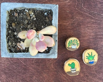 Set of Three Hand-Painted Decorative Magnets on Wood   Made to Order   Cactus Trio