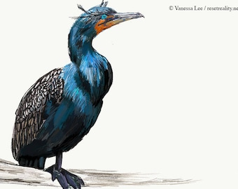 Double Crested Cormorant Print, Bird Illustration, Digital Drawing, Animal Wildlife Art Postcard  DCC